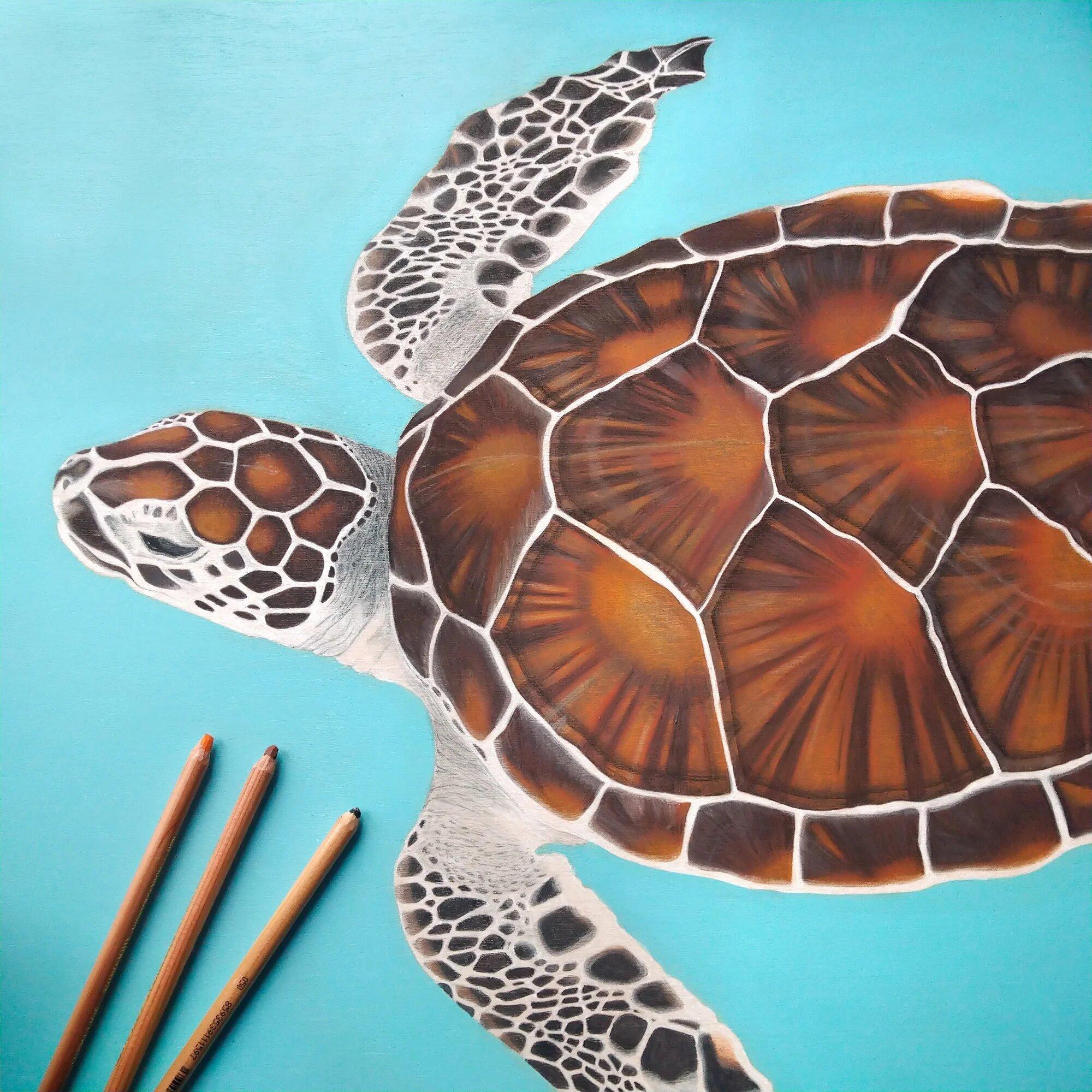 Peinture et dessin d'une tortue de mer sur bois, acrylique et pastels, par l'artiste Aline Belliard.